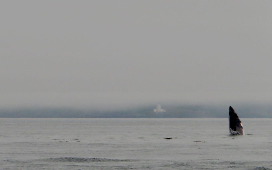 Some fog, minkes and finback sightings – July 22, 2021
